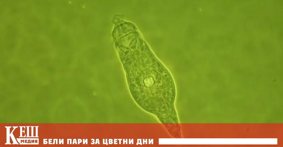 """Учени """"възкресиха замразени преди 24 хиляди години кръгли червеи"""