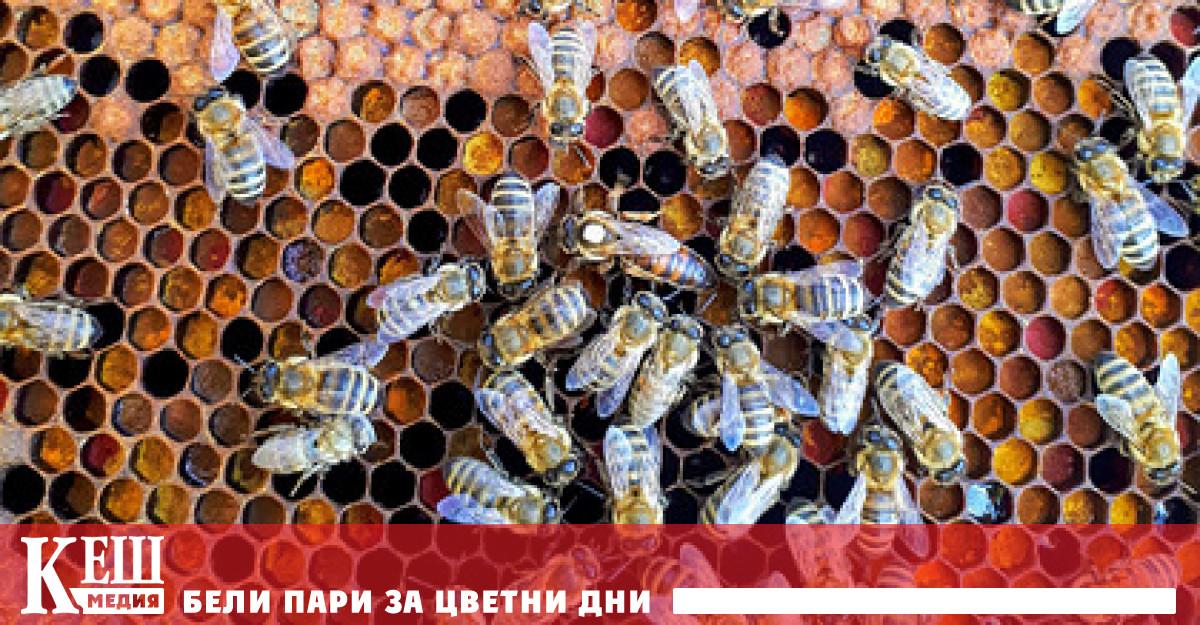 Учени откриха, че пчелите могат да се клонират сами