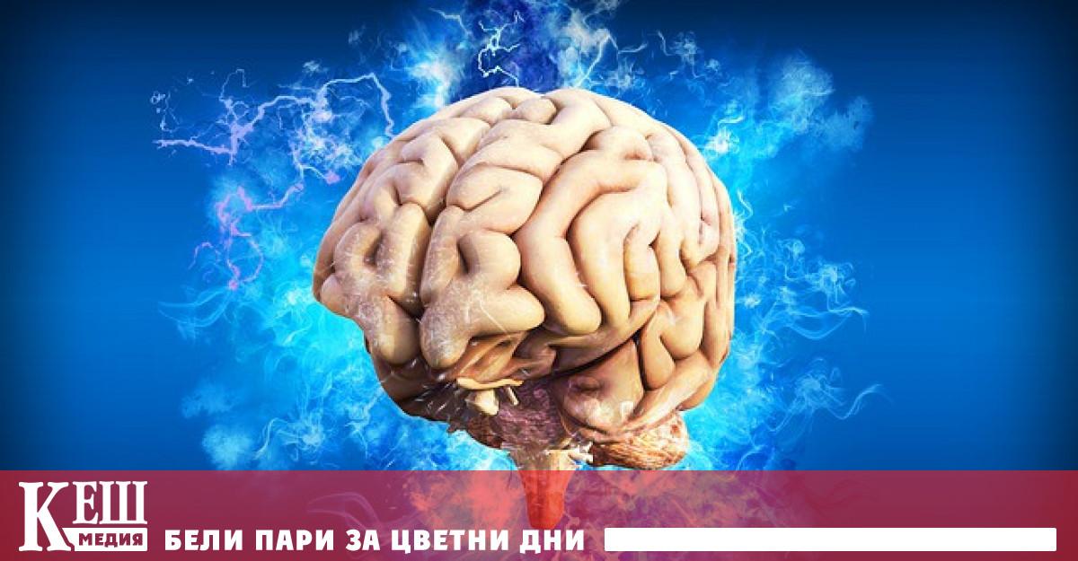 Изследователи от испанския университет Мигел Ернандес (UMH) представиха мозъчен имплант,